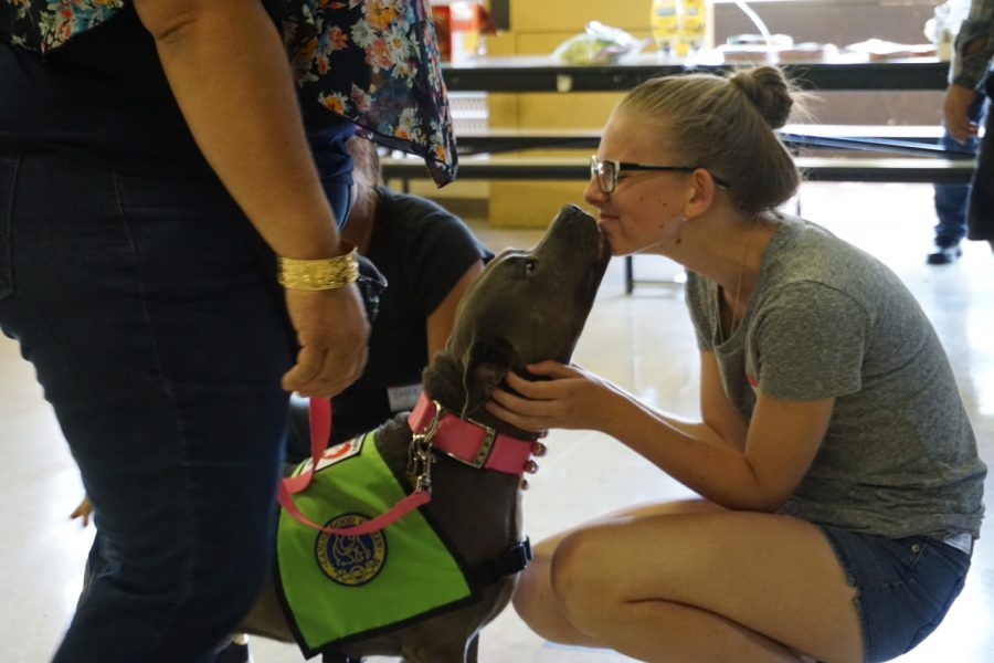 NHIS student, Veronika Sumyatina, interacts with one of the dogs brought to the Hawaii Humane Society class.