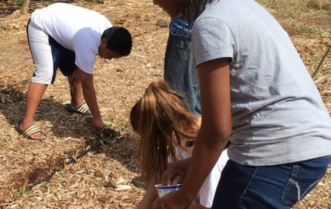 Plants and students grow in Agriculture class
